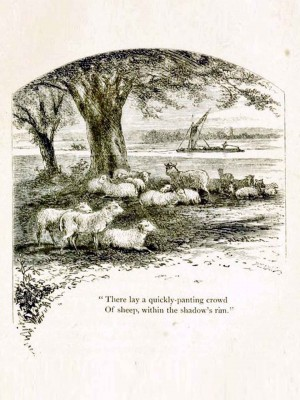 Page 80, Sheep in the Shade, illustration by Hammatt Billings, Rural Poems by William Barnes, published by Boston, Robert Brothers 1869